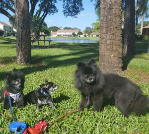 Dog Walking West Palm Beach